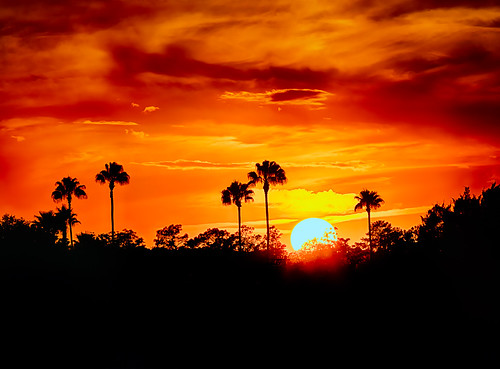 central disneysprings disneyworld fl florida landscape nature northamerica orange orlando palm palmtree red smallgroupoftrees sun trees us usa unitedstates unitedstatesofamerica waltdisneyworld lakebuenavista