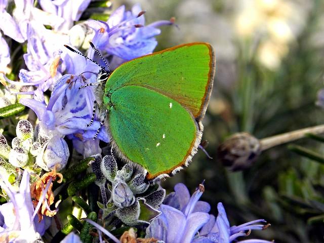 Il bello del verde (sul blù del Rosmarino)