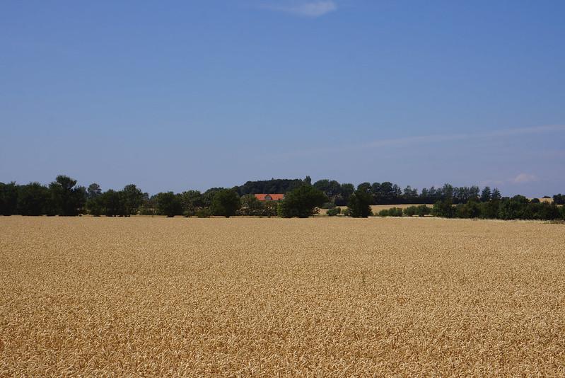 Kaedeby-Haver-2014-07-24 (3)
