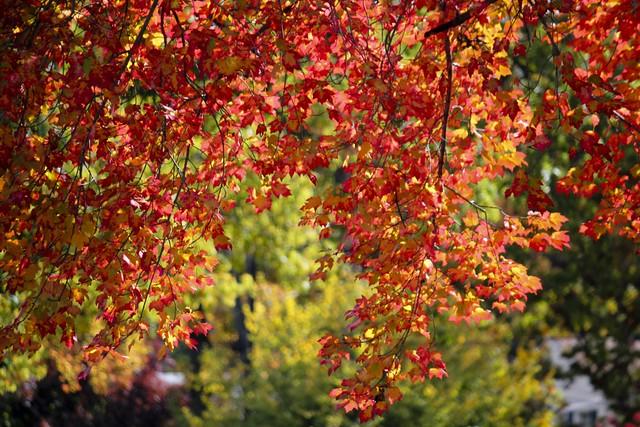 Fall Leaves no.2