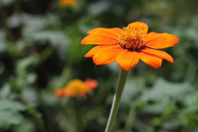 Orange you lovely?