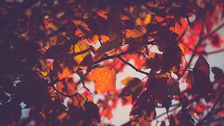Autumn - Belle Isle | by alexwhecht