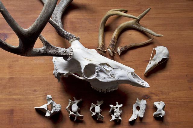 bones and antlers