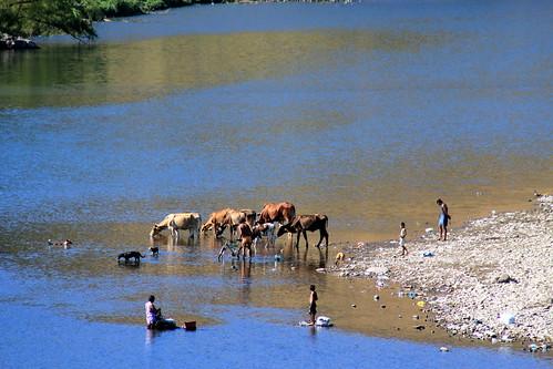 animal rio river planet elsalvador herd fleuve troupeau