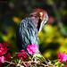 <p>Green Heron<br /> <br /> Punta Cana, Dominican Republic</p>