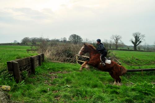 ireland tipperary equestrian countytipperary crossogue crossogueequestiran