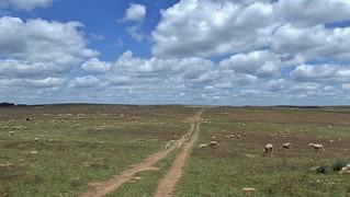 Special Protection Area (SPA) Castro Verde in Baixo Alentejo, Portugal - May 2012