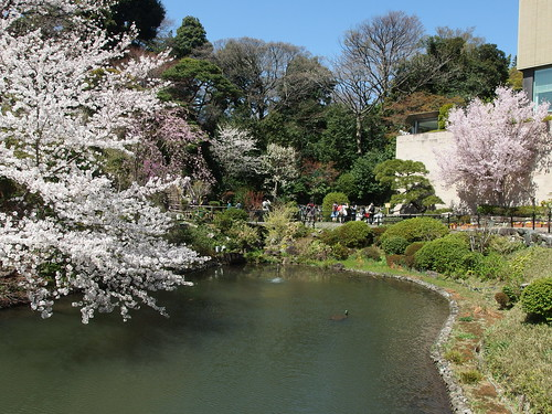 Cherry blossoms @ Garden of Hotel Chinzanso Tokyo @ Bunkyo | by *_*