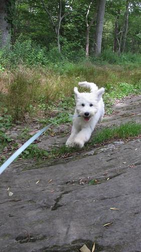 Dog is running. | by BuzzFarmers