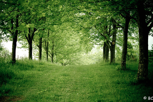 trees ny green grass canon path country row 7d patterson scenicsnotjustlandscapes