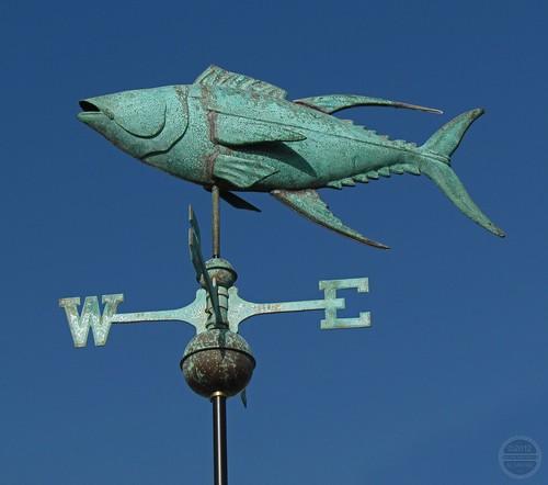 FIMG_3998 SX30 15MAY12 Wvane Fish SLO CA