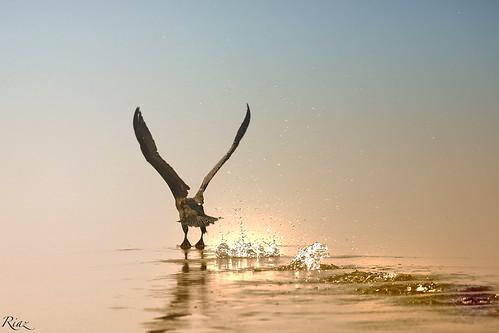 pakistan sunset nature water birds canon islamabad riaz bluehours 1dx islbirder canon6oomm