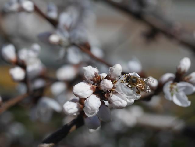 火, 2014-04-01 13:33 - Brooklyn Botanic Garden