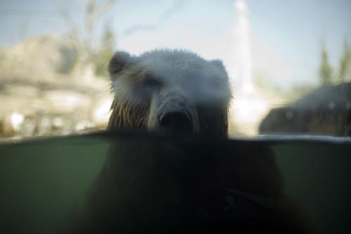 Zoo Life | by epiøne