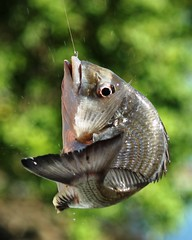 Hooked! by benwebboz