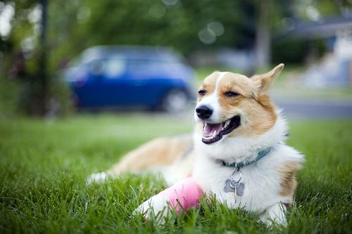 Zoey fractured her Ulna | by epiøne