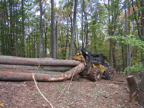 Skidding six large trees at once.