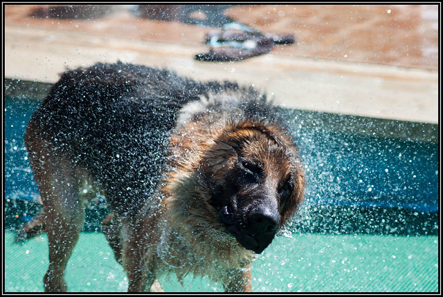 hydro-turbine-drill-dog