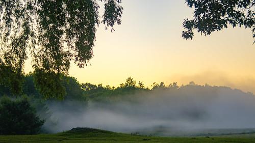 morning trees mist green fog sunrise dawn pentax goldenhour daybreak pentaxk3