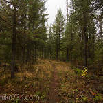 Kishenehn Trail