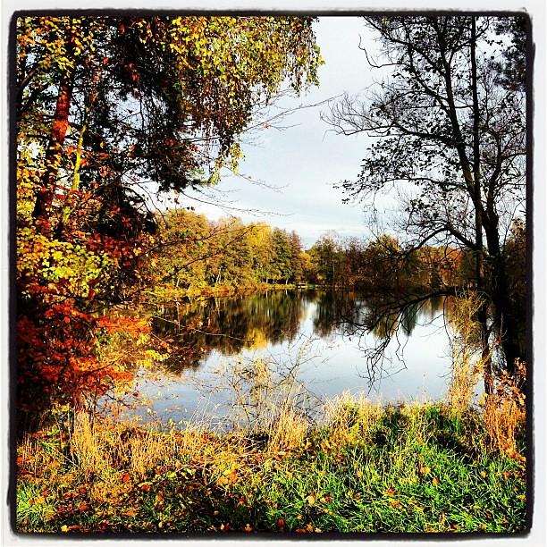 Weiher im Herbst