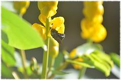 Hurgando la flor Part4
