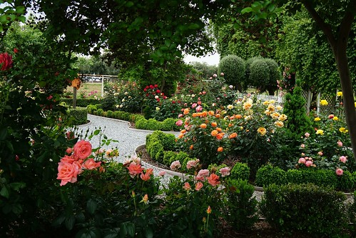 Rose Garden | by pirate_renee