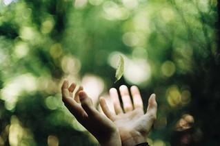 Flying leaf. | by -MRGT