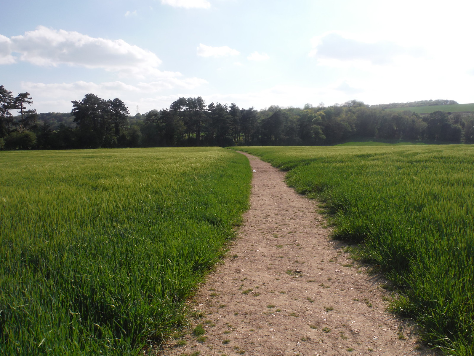 Up through Fields from Compton SWC Walk Rowlands Castle Circular
