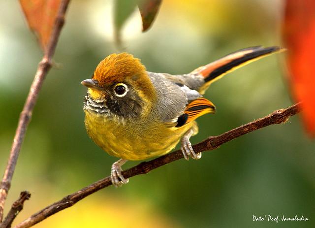 Bird - 9e