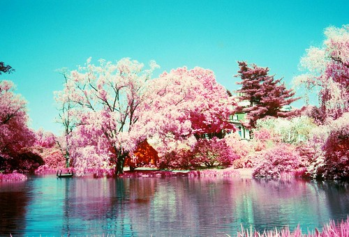 film slidefilm infrared ektachrome oldwestburygardens mostbeautifulpictures