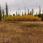 Aspen Grove in Hidden Meadow