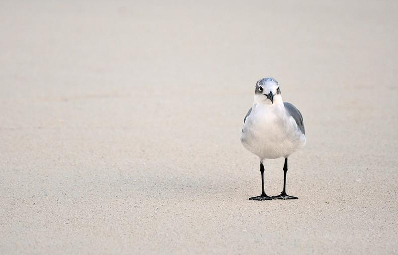 Möve auf Santa Maria Island (USA)