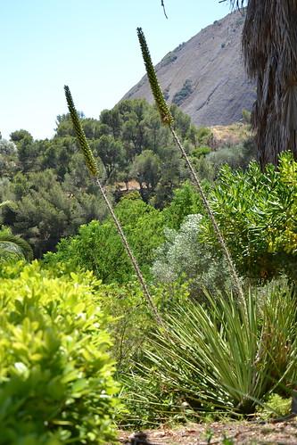 (13) Le Parc du Mugel et son jardin exotique - La Ciotat 32301499124_33f1e29b16