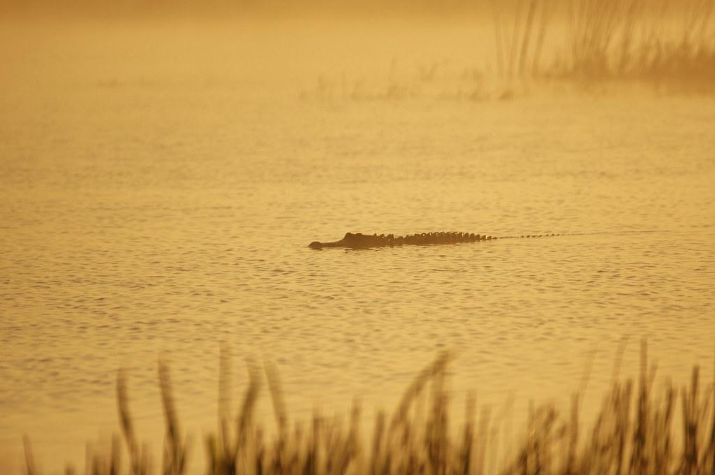Misty Mornin' Cruisin' - - Viera Wetlands - - Sony A580