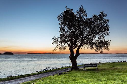 australia au nsw newsouthwales portstephens shoalbay bay tomaree tomareeheadland tomareenationalpark tree sunset canoneos6d canonef1740mmf4l