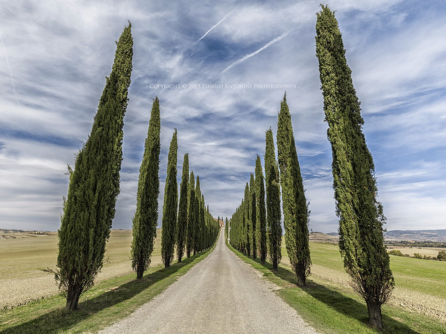 Classic Tuscany (13143)