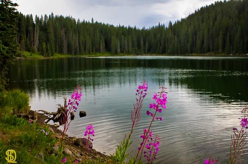 colorado wildflowers grandmesa