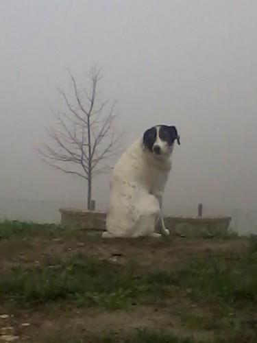 il cane, diverse solitudini - the dog, different solitudes