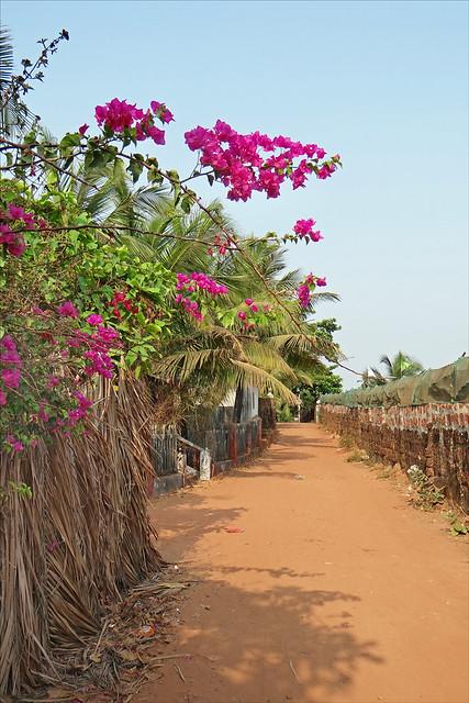 Un chemin vers la plage (Goa,Inde)