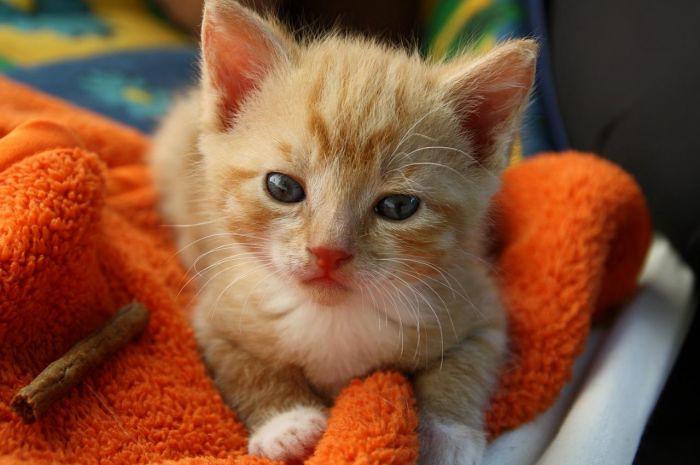 Download 92+  Gambar Kucing Hormat Lucu Gratis