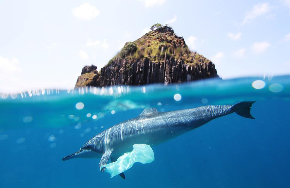 dolphin plastic bag at fernando de noronha