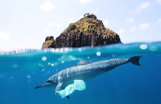 dolphin plastic bag at fernando de noronha | by Jedimentat44