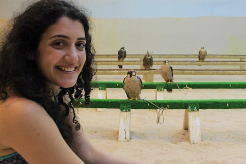 Falcons at souq waqif   by Rayya The Vet