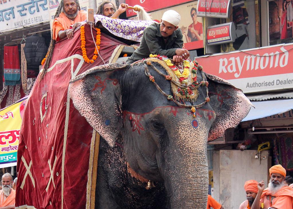 Parade in Haridwar - Elephant 2