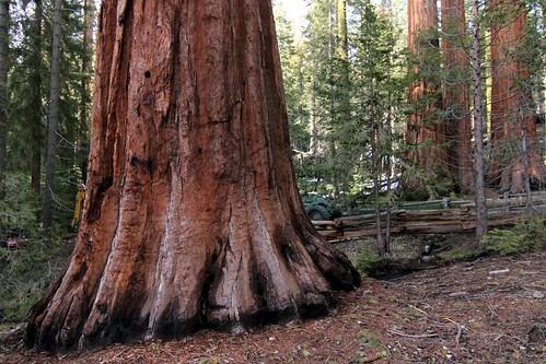 california canon yosemitenationalpark giantsequoias t3i mariposagrove fencedfriday