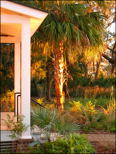 usa tree sunrise earlymorning southcarolina veranda palmtree porch verandah doorstep philscamera lowcountry bluffton palmettobluff goldensunlight philandlucysotherplace