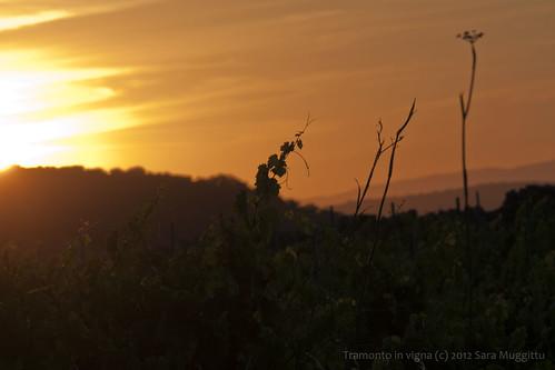 tramonto vigna mamoiada