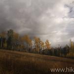 Meadow along the Kishenehn Trail