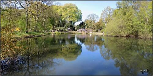 bremen park deutschland nikoncoolpixp7700 rhododendron